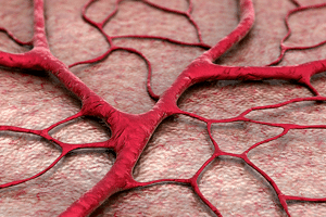 blog-image-Blood-Vessels-as-We-Age